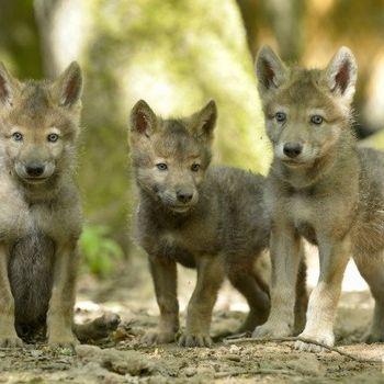 Wolfspark Merzig mit Hund nicht mehr erlaubt