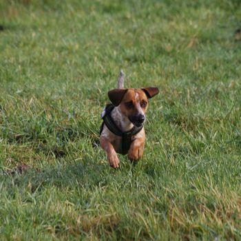 Hundeschule Hamm im Hundezentrum