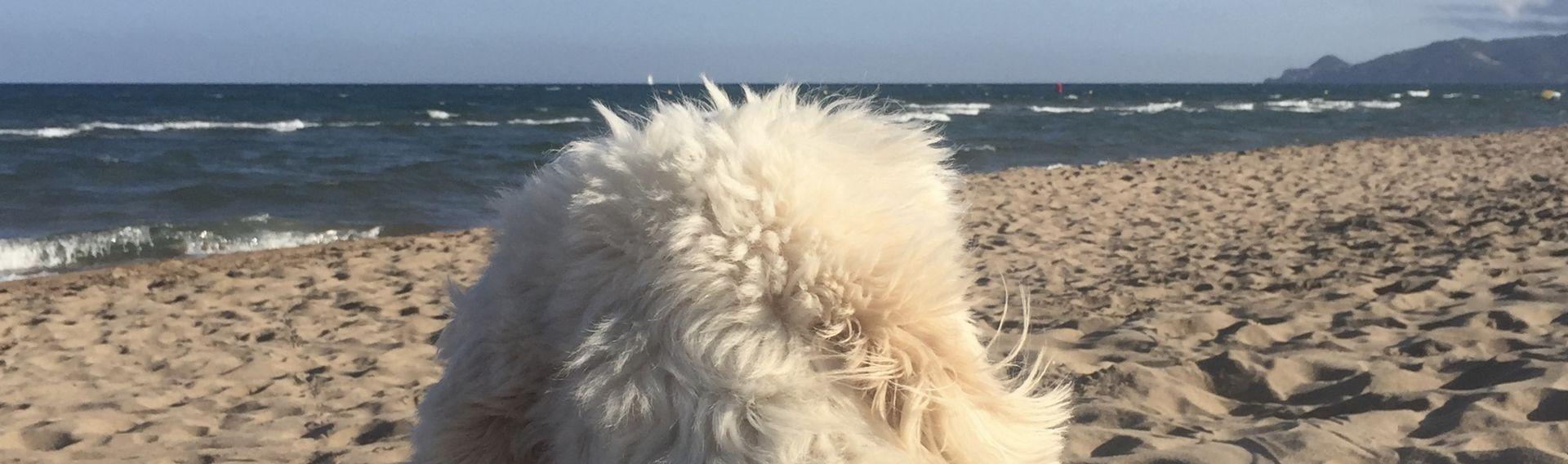 Strandhotels mit Hund