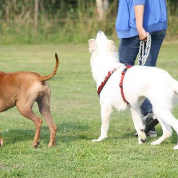 Freilauffläche Hunde Treptow-Köpenick