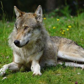 Tierpark Sababurg – Ausflug Hessen mit Hund
