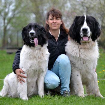 Hundeschule Ribbeckshorst