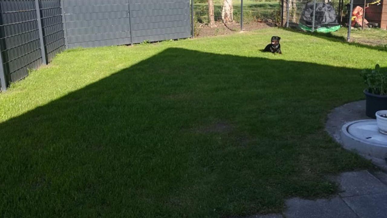 Ferienwohnung Rottweilerhuus im schönen Ostfriesland