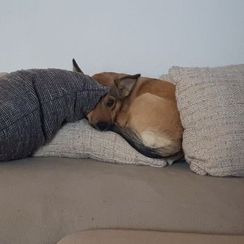 Hund im Freibad Trebur 21. + 22.09.2019