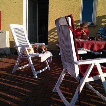 Rügen mit Hund – Fewo mit Zaun