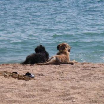 Urlaub mit Hund Föhr
