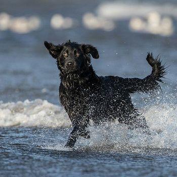 Hundeschwimmen Augustusburg Freibad