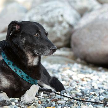 Hundeschwimmen Alt Garge Bleckede 27.09.2020