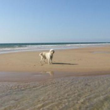 Hundestrand Baabe auf Rügen