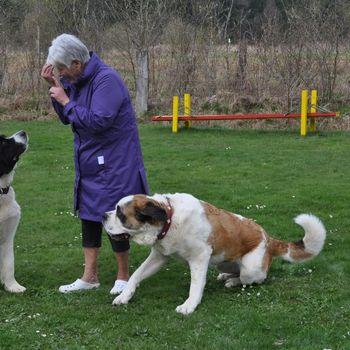 Camping und Mietwohnwagen mit Hund