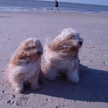 Urlaub Nordsee mit Hund & Hundetraining