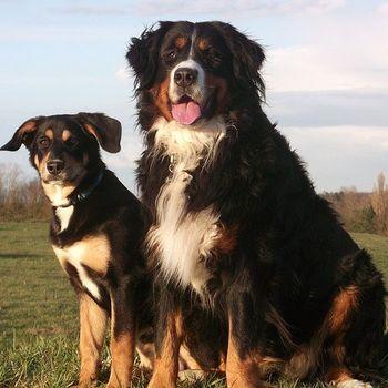Ausflug Brandenburg mit Hund