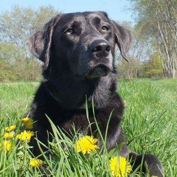 Schwimmen mit Hund Rhreinstrandbad Rappenwört