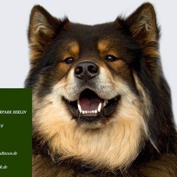 Hundetag Tierpark Berlin 2020