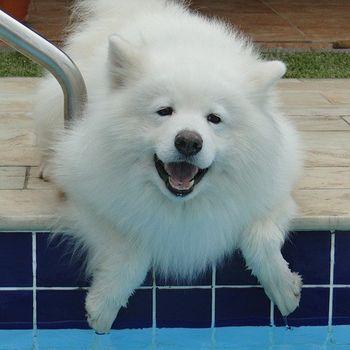 Freibad mit Hund am Saisonende 2019