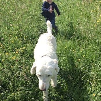 Hermannsdenkmal Hunde erlaubt?