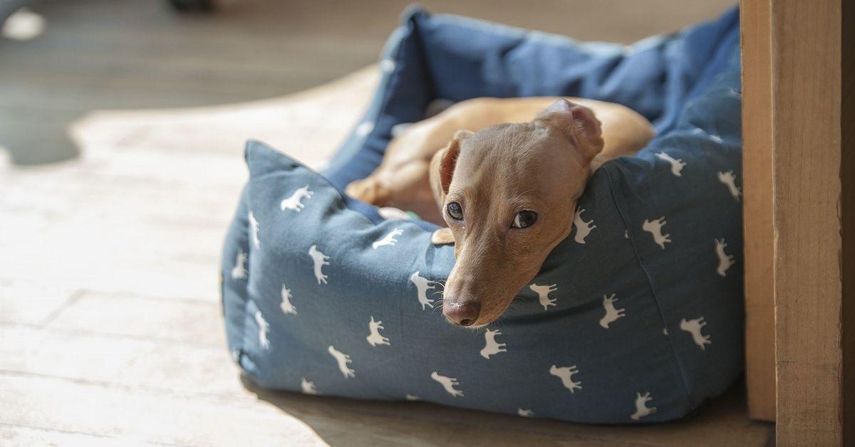 Pensionen mit hund erlaubt for Pension mit hund nordsee