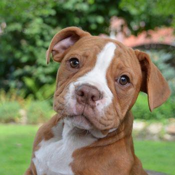 Hundetraining Hamburg – Hundeerziehung Welpen