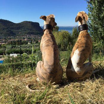 Hundeschwimmen im Freibad Neugablonz