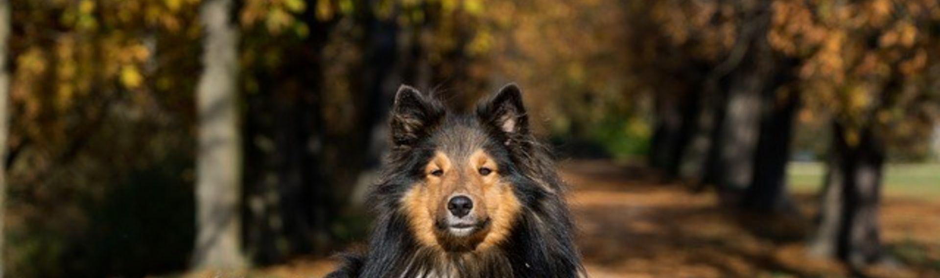 Ausflug Bayericher Wald mit Hund