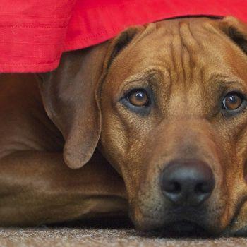Hundemesse Offenburg 14.-15.3.2020 Termin wegen Corona verschoben