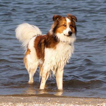 Hundeschwimmen 2019 Lapertheim