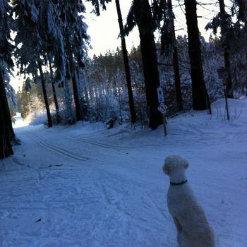 Urlaub im Heidiland – Hundeloipe Flumserberg