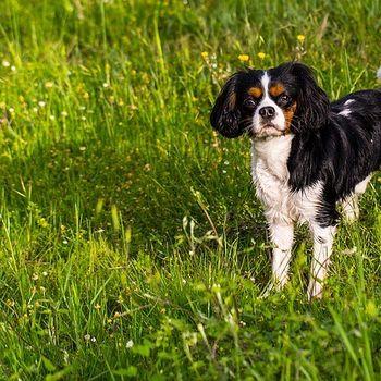 Sehenswürdigkeiten Sachsen Anhalt mit Hund