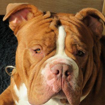 Hunde im Familienbad Hengstey