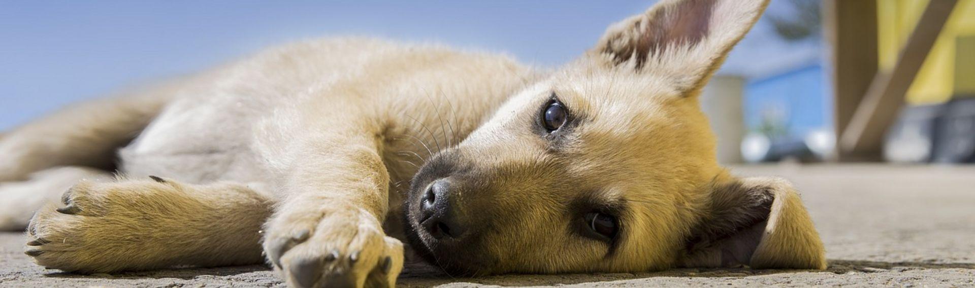 Hotels mit Hund – weltweit – suchen & buchen