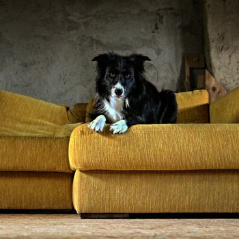 Badetag für Hunde Landsweiler-Reden