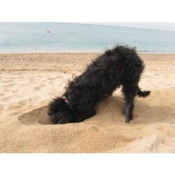 Hundestrand Börgerende-Rethwisch