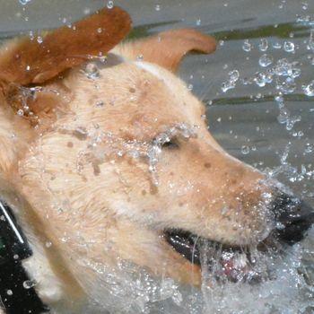 Hundeschwimmen Grünberg 15.09.2019
