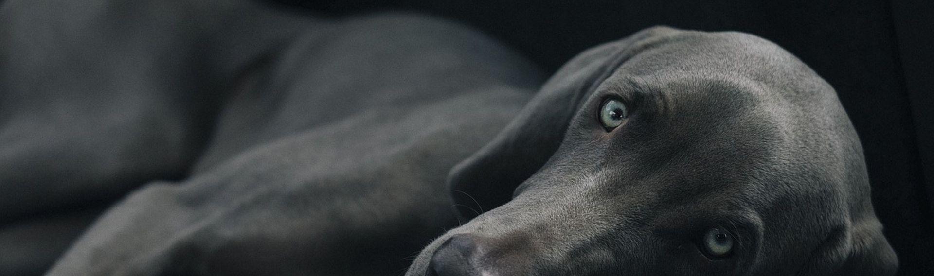 Dog Live 18.- 19.1. 2020